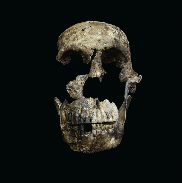 Researchers working in a South African cave have discovered more remains of a newfound human relative called Homo naledi.