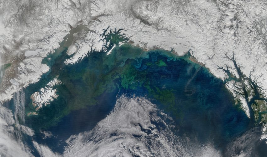 Today's Image of the Day comes thanks to the NASA Earth Observatory and features a look at a spring phytoplankton bloom in the Gulf of Alaska.