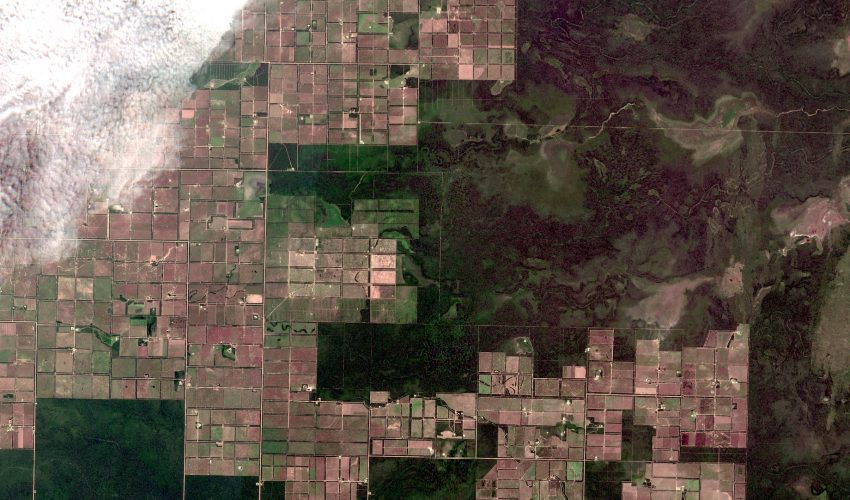 Large-scale agricultural expansion has been responsible for an increasing proportion of tropical forest loss, according to a new study.