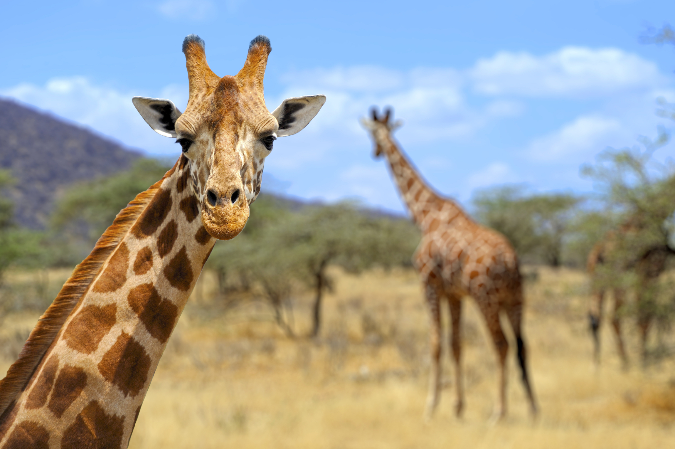 In this edition of our recurring Your World feature, we take a look at the greatest giraffes of Instagram.