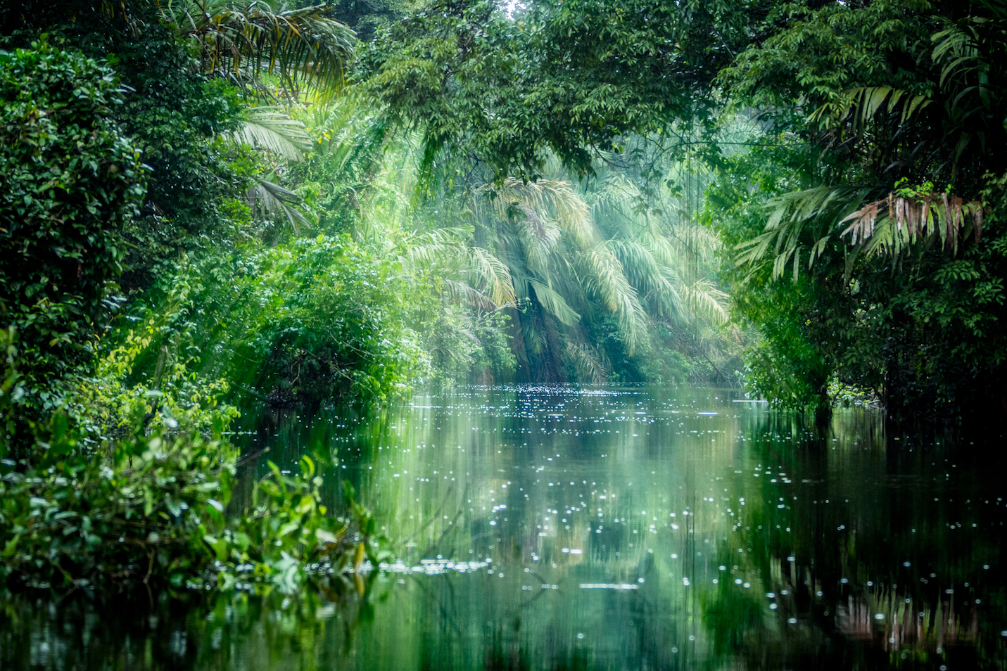 In this edition of our recurring Your World feature, we take a look at the greatest rainforests of Instagram.