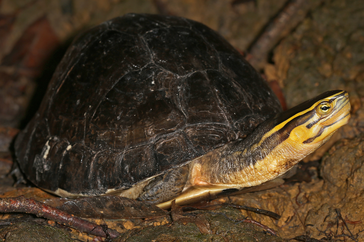 Authorities have seized 330 exotic tortoises from Madagascar that were being smuggled into Malaysia, AP reported.