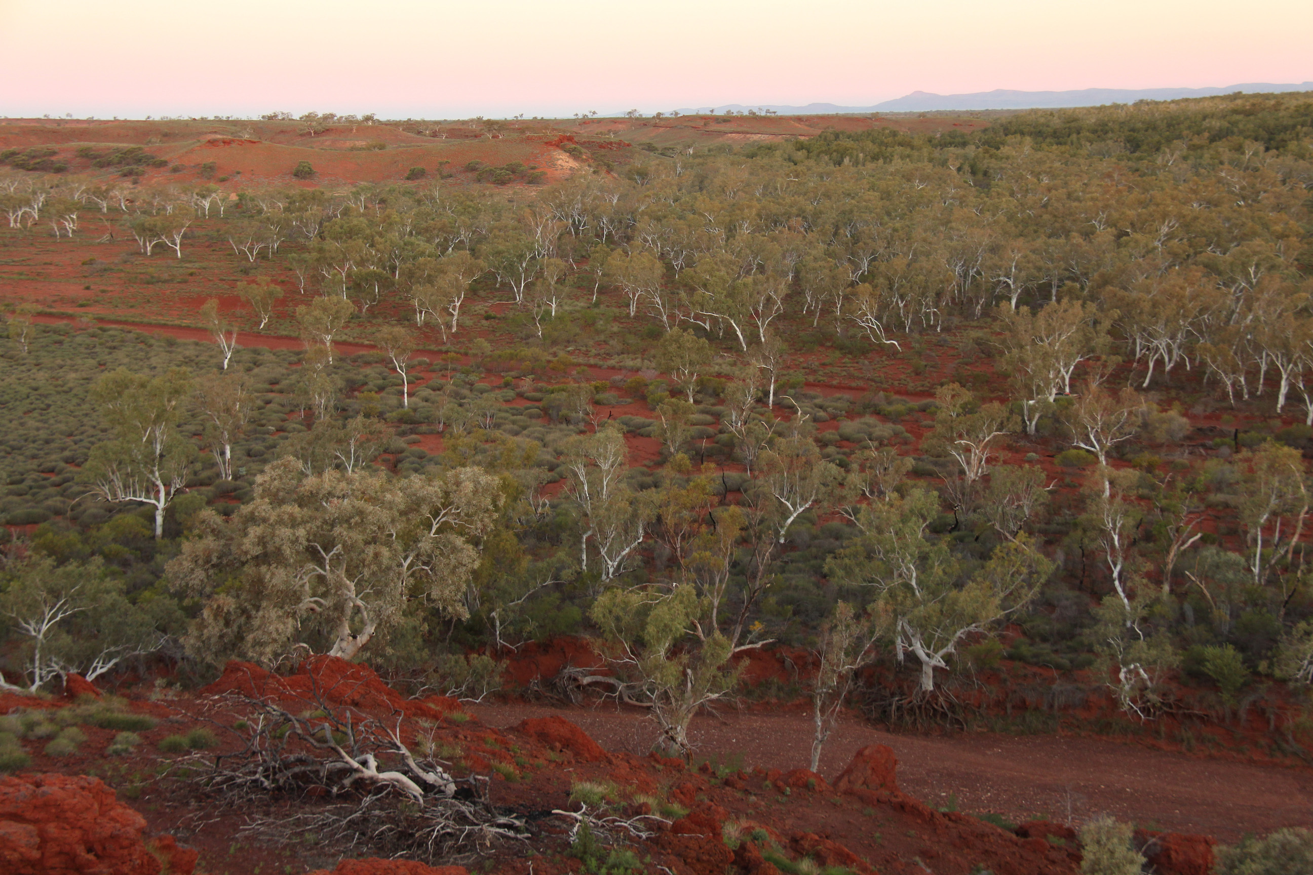 Forests and woodlands about 60% of the size of Australia have recently been identified, increasing the amount of global forest by 9%.