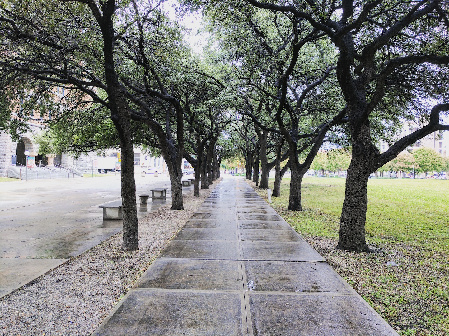 New research has found that during heat waves, urban trees can actually increase air pollution levels and ozone formation.