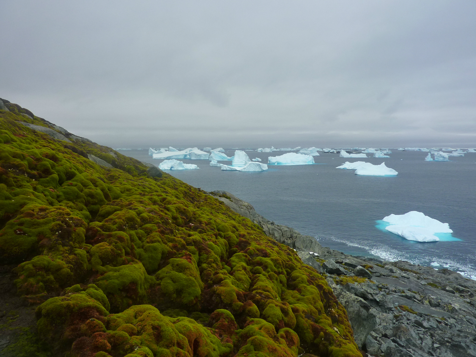 Weather patterns in Antarctica are rapidly changing, and the continent is about to get much greener if the temperatures continue to climb.
