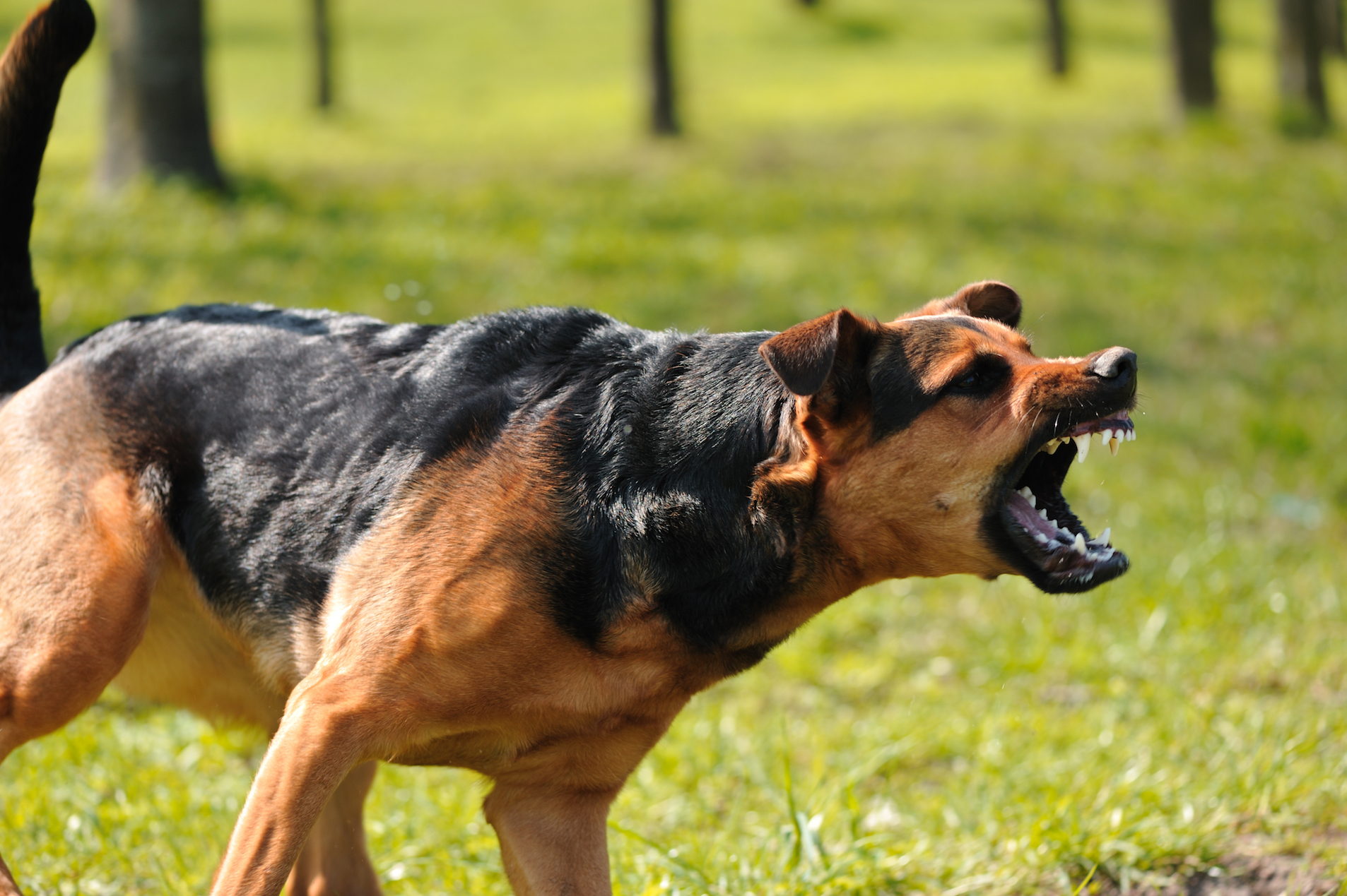 Growling and teeth baring are not the only ways dogs convey aggression. A new report reveals how humans can better understand their dog.
