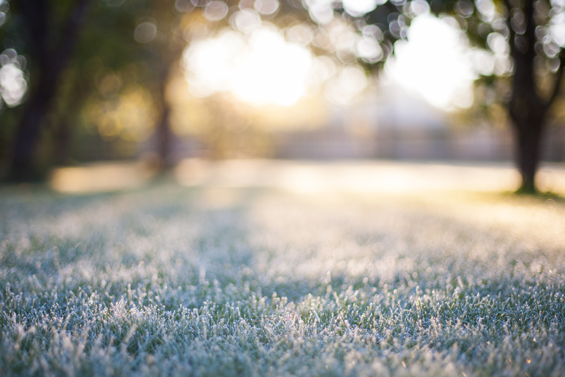 A new study from the University of Utah and the USGS identifies the underlying cause of frost timing so that it can be accurately forecasted.