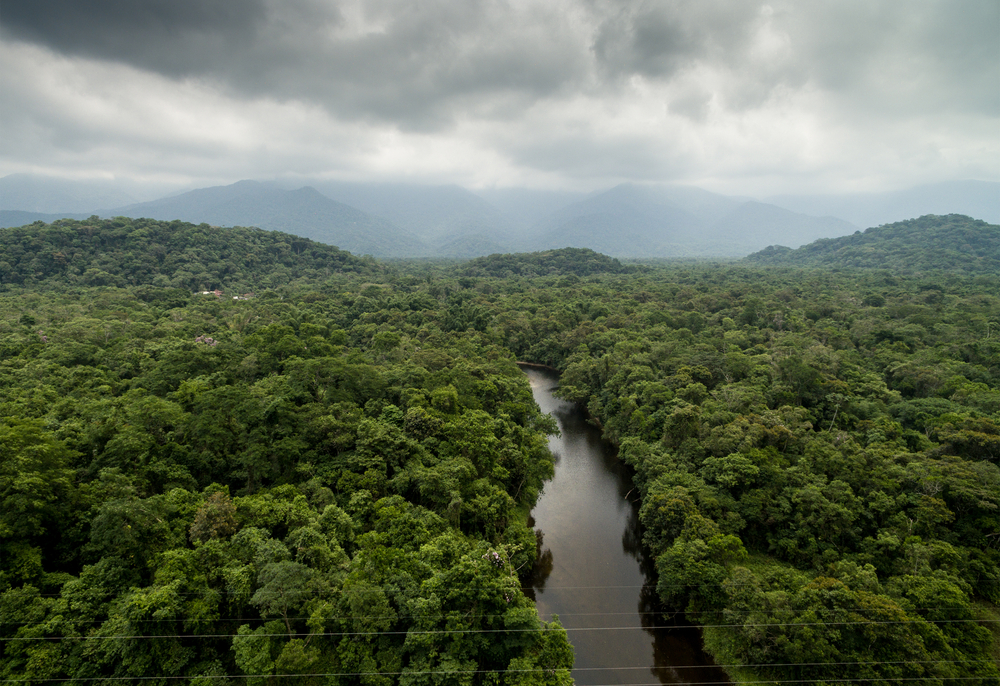 Vegetation has a profound effect on the Earth's climate, altering weather patterns as much as 30 percent, a new study shows.