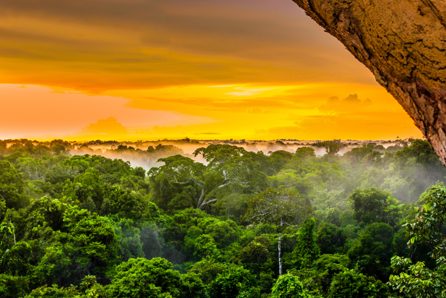 new research is emerging that suggests that the Amazon rainforest has a naturally-occurring border that gives it staying power.