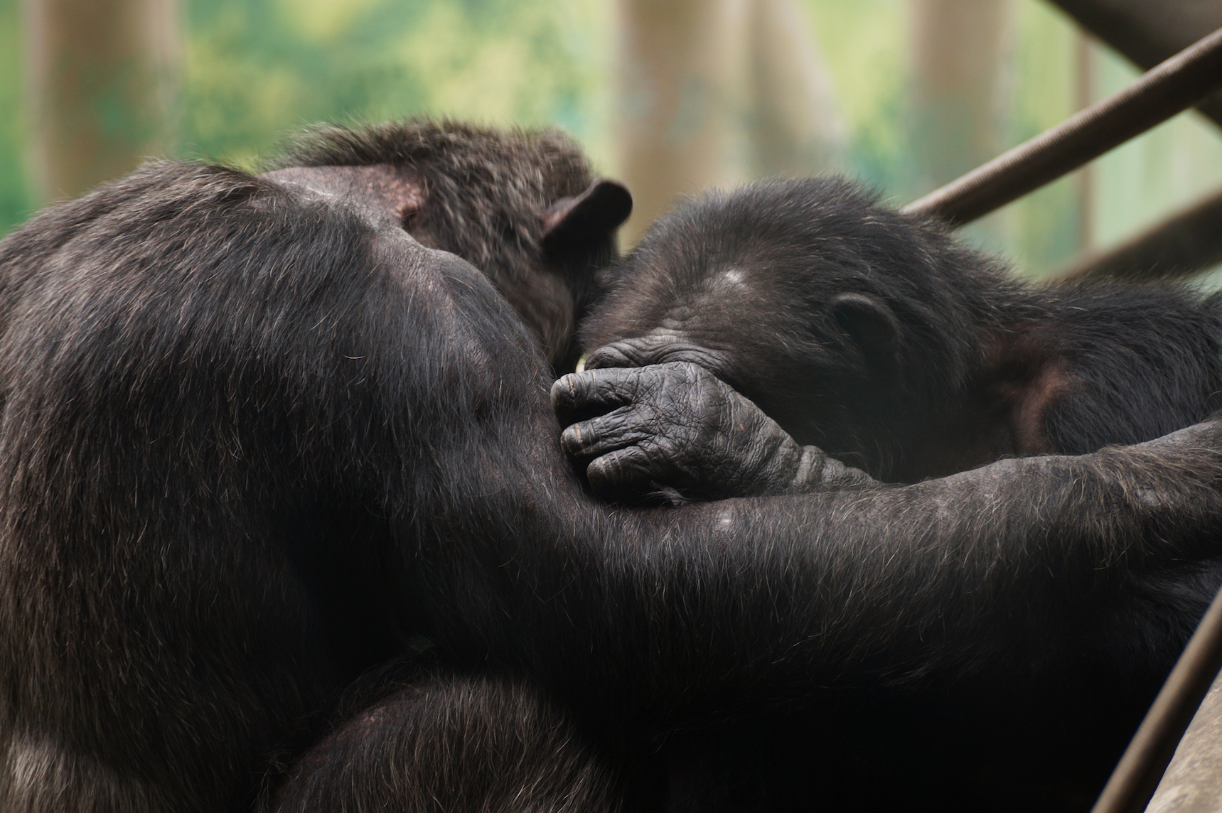 Humans, like chimpanzees, console their threatened peers out of empathy, according to a new study published in PLOS ONE.