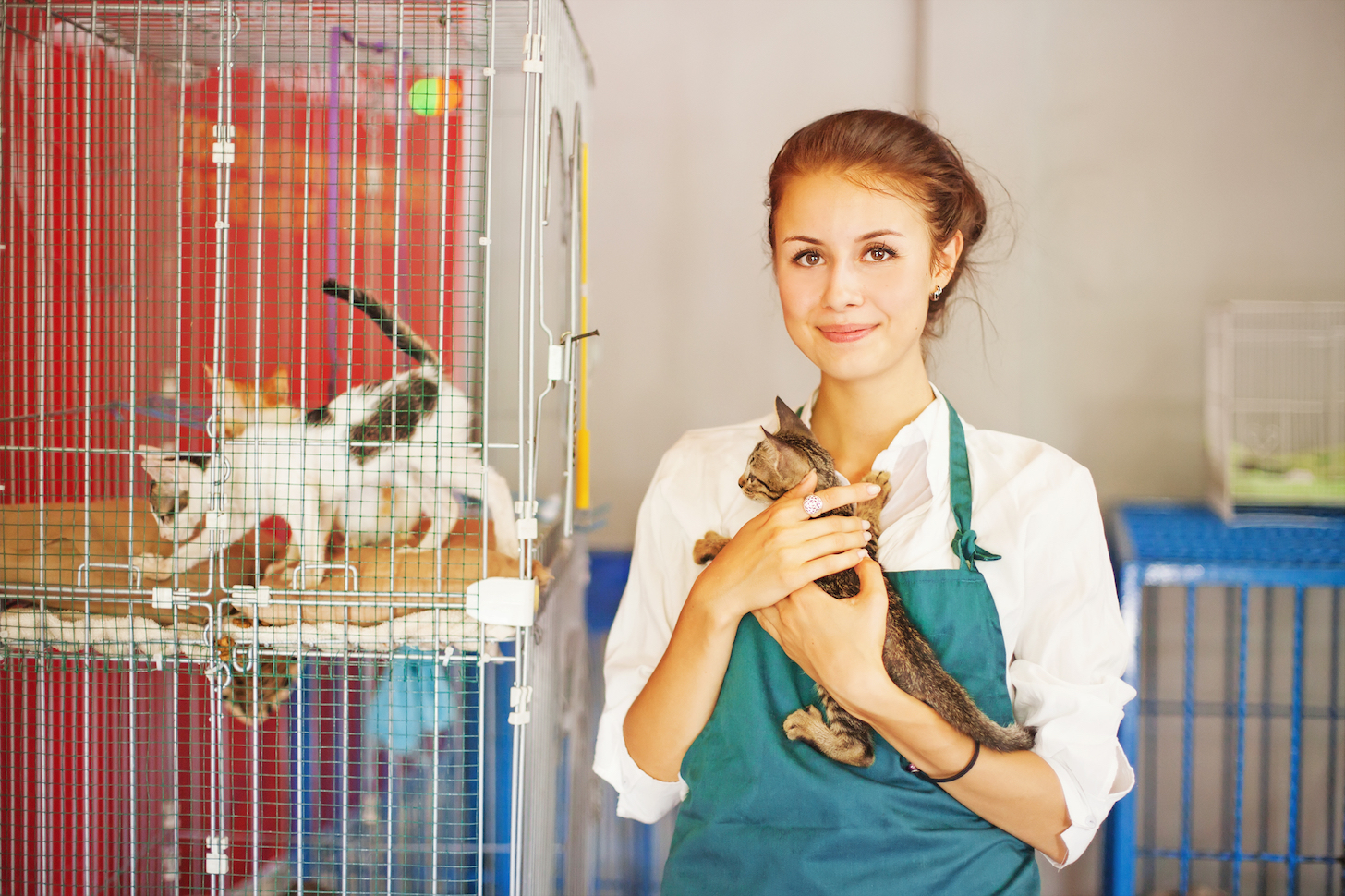 What's the difference between animal shelters and animal rescues? •  Earth.com