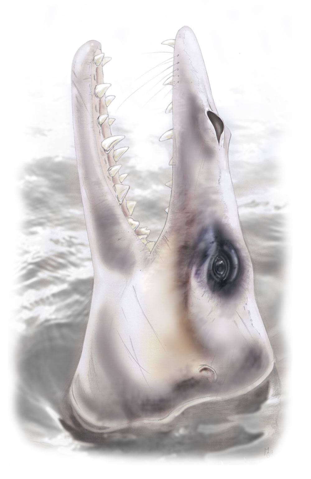 A new study indicates that the extraordinary hearing abilities of whales evolved after they became fully aquatic.