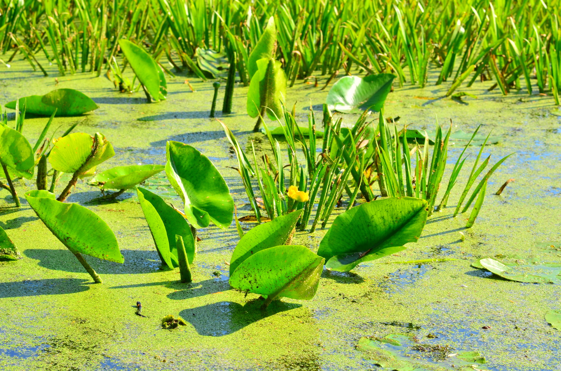 Tropical peatlands, which help remove carbon dioxide from the atmosphere, are threatened by climate change that alters rainfall patterns.