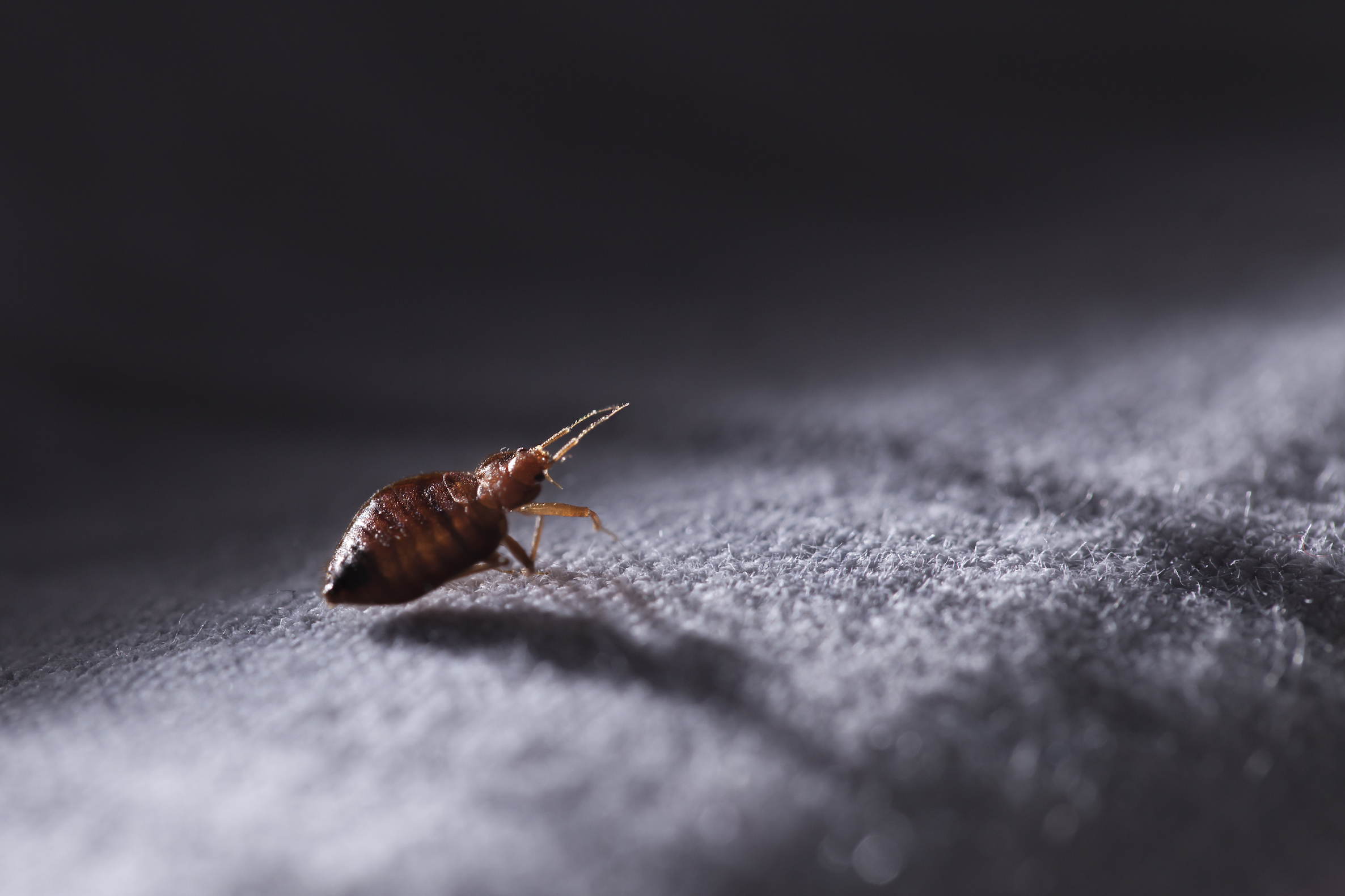 Most U.S. travelers can't identify bed bugs but they hate them all the same, according to a new study from the University of Kentucky.