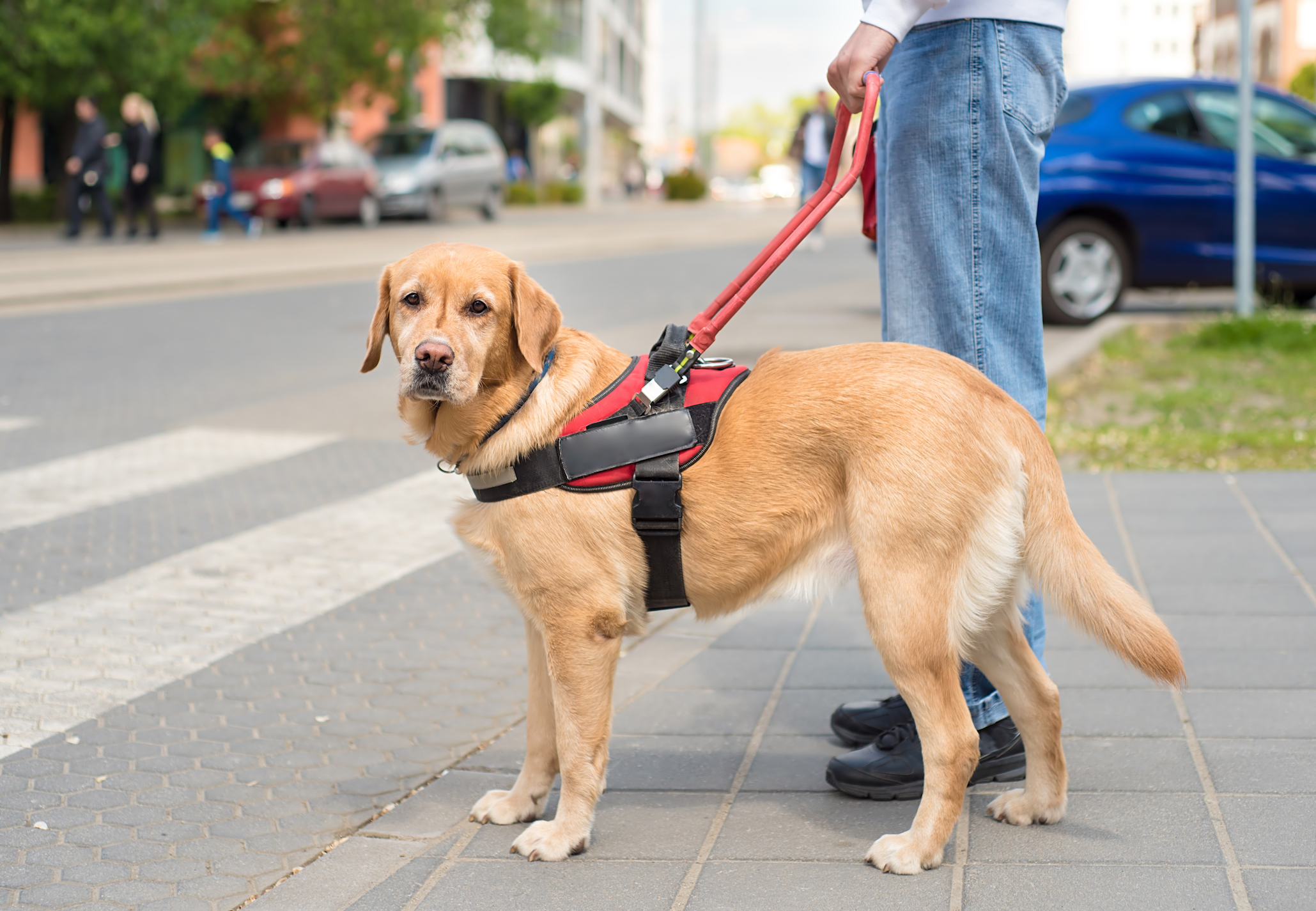 A new tool has been created by animal experts at the University of Nottingham to predict which puppies make the best guide dogs.