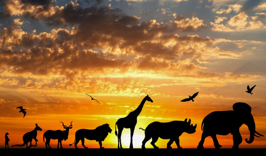 Animals evolved earlier than previously believed and prior to the global Ice Age that hit the Earth about 700 million years ago.