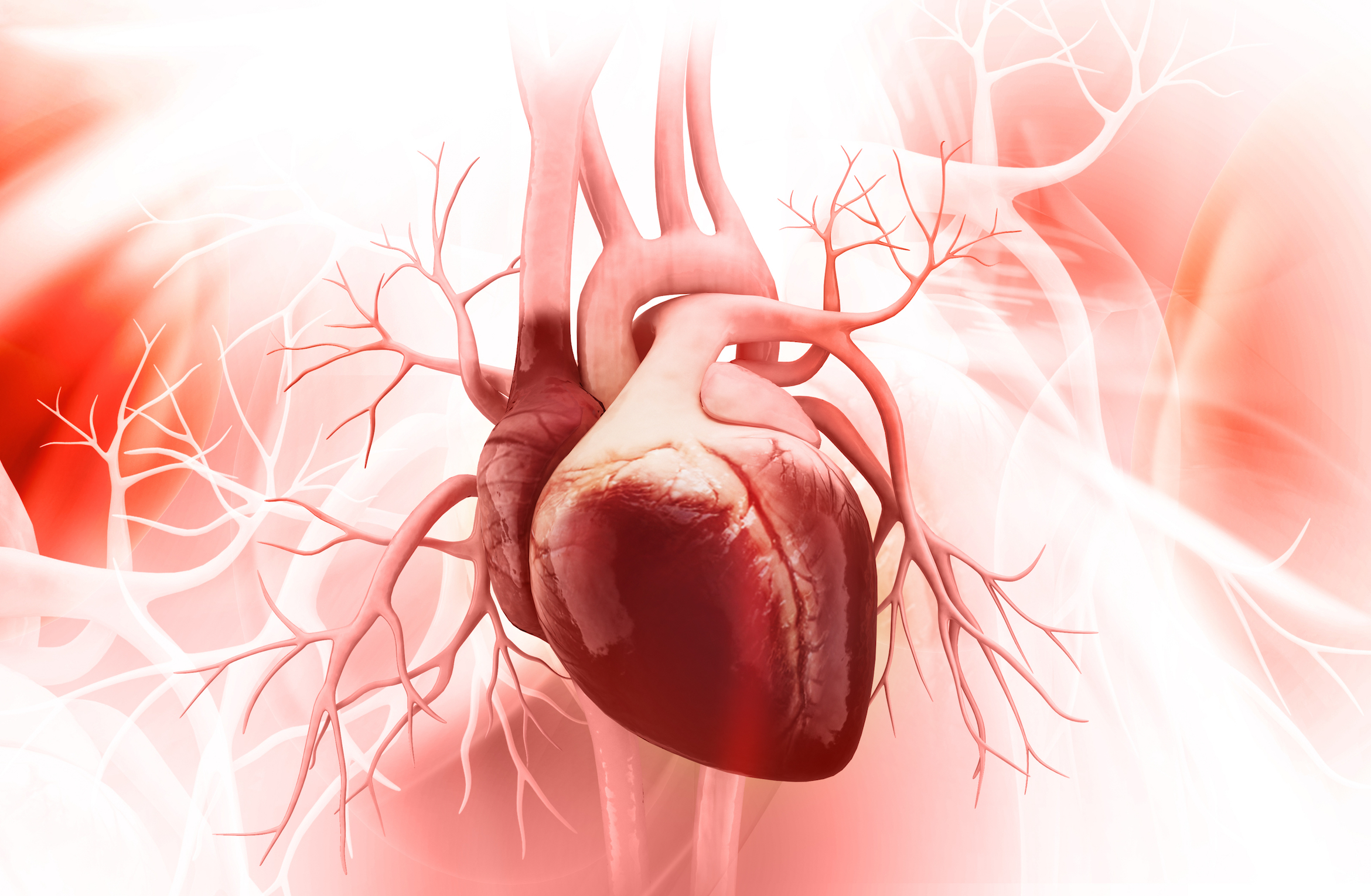 Humans could eventually be able to regenerate the heart, according to a new study from the University of Florida.