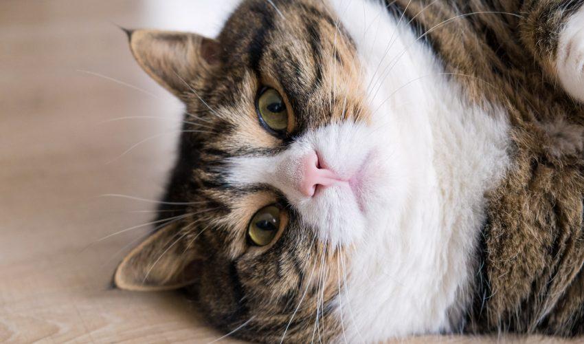 tabby cats names