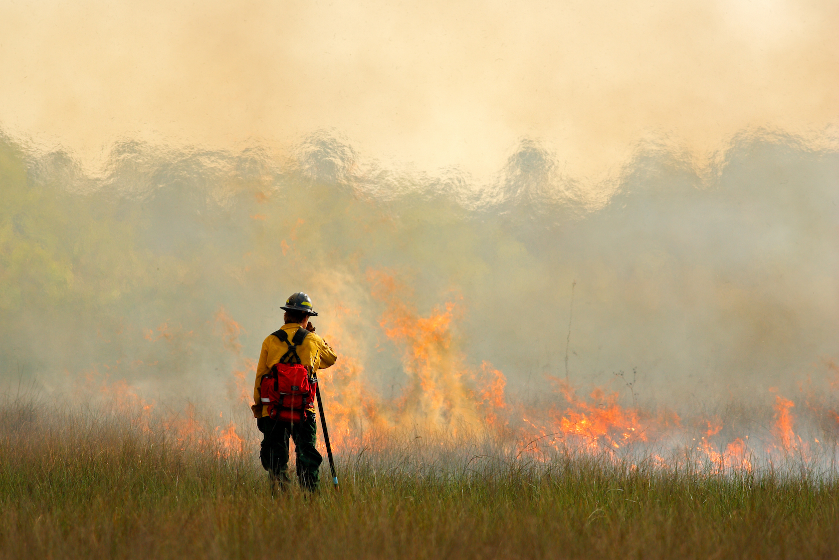Open grasslands and the wildfires that sustain them have been greatly reduced over the last 20 years due to a big increase in agriculture.