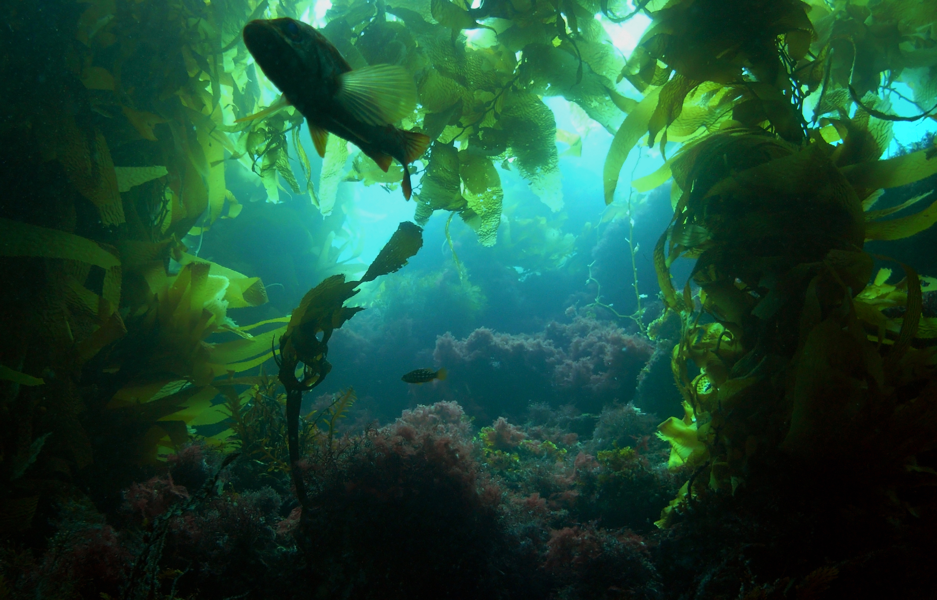 According to new research, ocean acidification will cause a decline in fish diversity, and small, weedy fish species will take over.