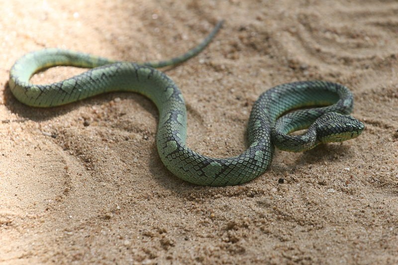 According to a new study, snakebites cost Sri Lanka the equivalent of over 10 million dollars in medical expenses each year,