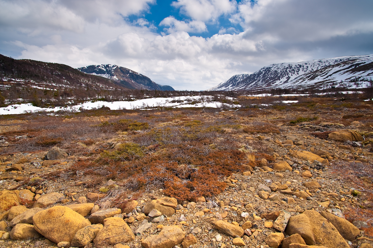 Plants and soil in the Arctic tundra absorb mercury released into the air by industry in lower latitudes, a new study found.