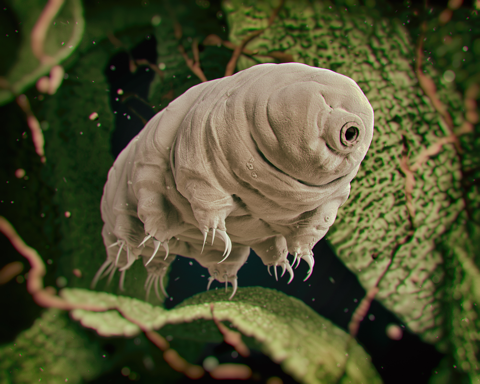 The Tardigrade, an eight-legged micro-animal, may be the world's most indestructible species and will exist for at least 10 billion years.