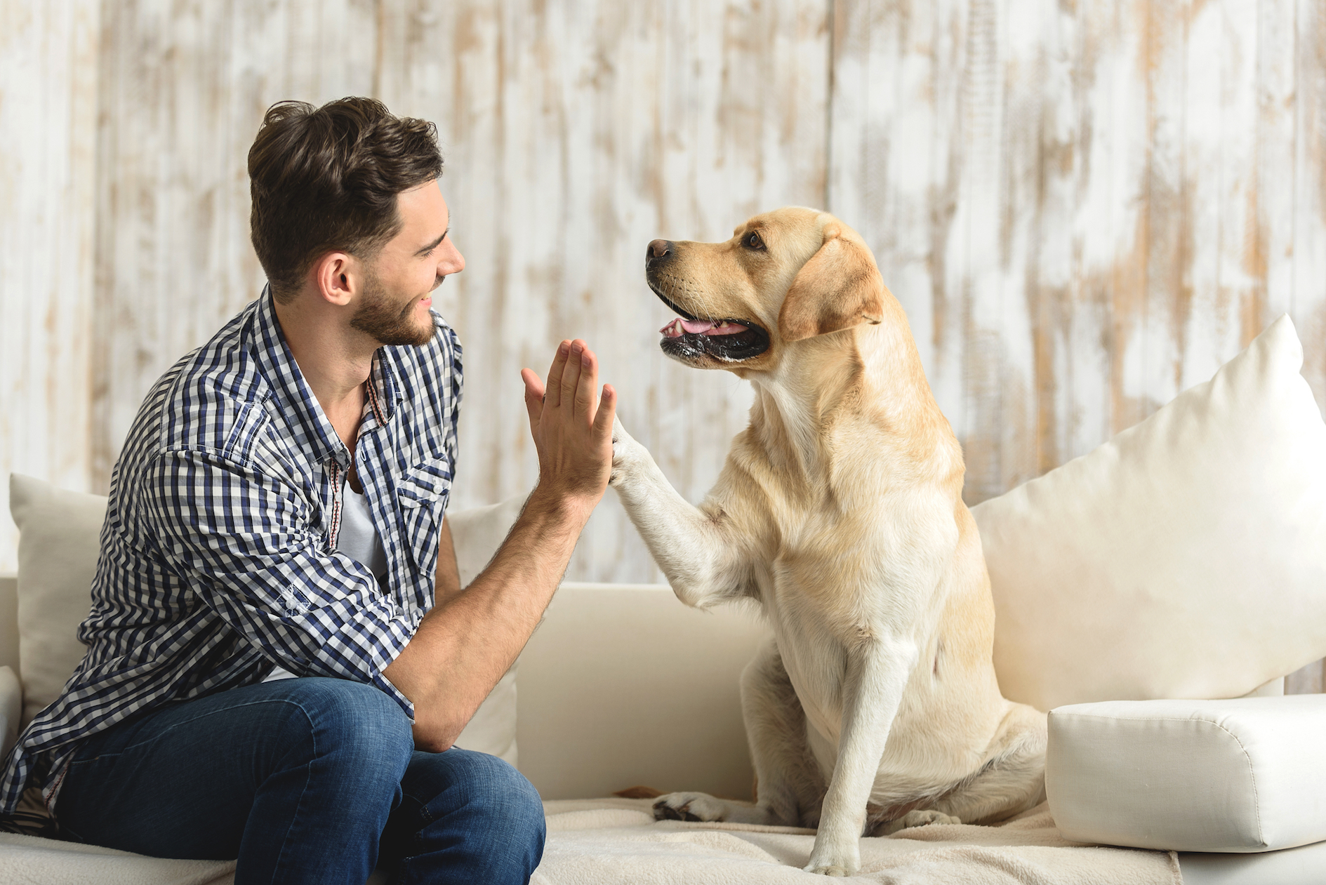 Researchers have identified a genetic marker in domestic dogs that causes extremely sociable and outgoing behavior.
