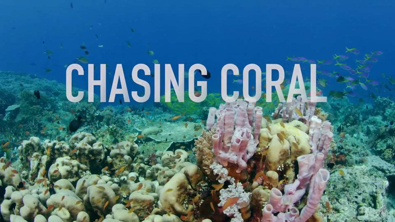 Scientists, divers, and underwater photographers teamed up to document the disappearance of coral reefs in the Netflix film Chasing Coral.