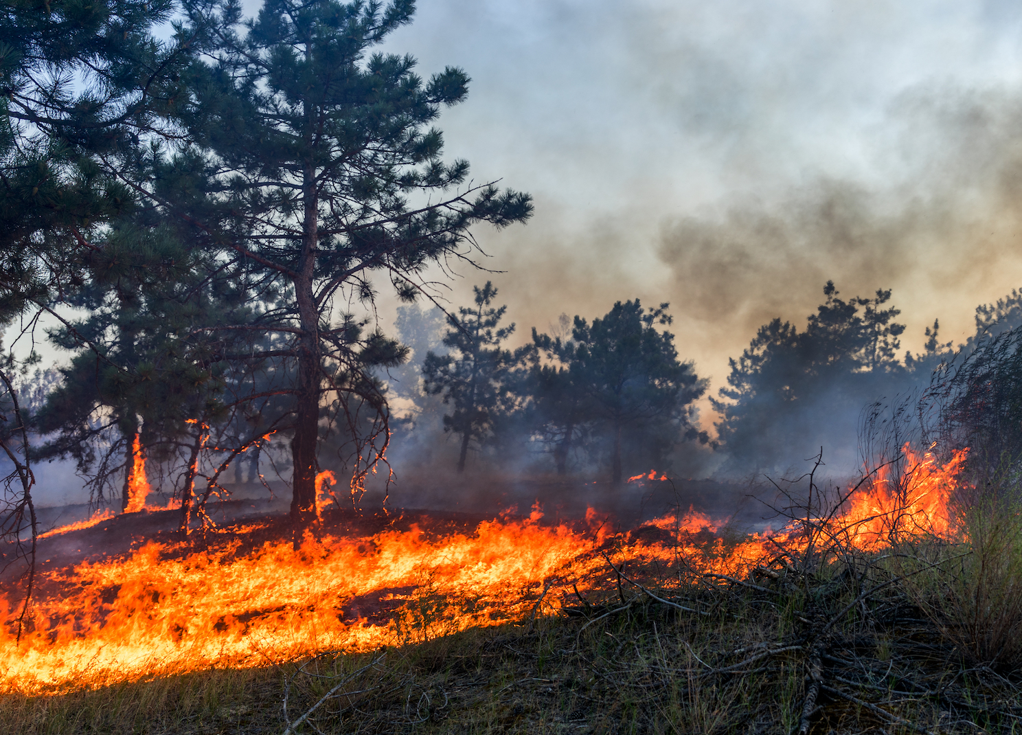 A new study suggests that management agencies are using an outdated method of calculating soil moisture for wildfire risk assessments.