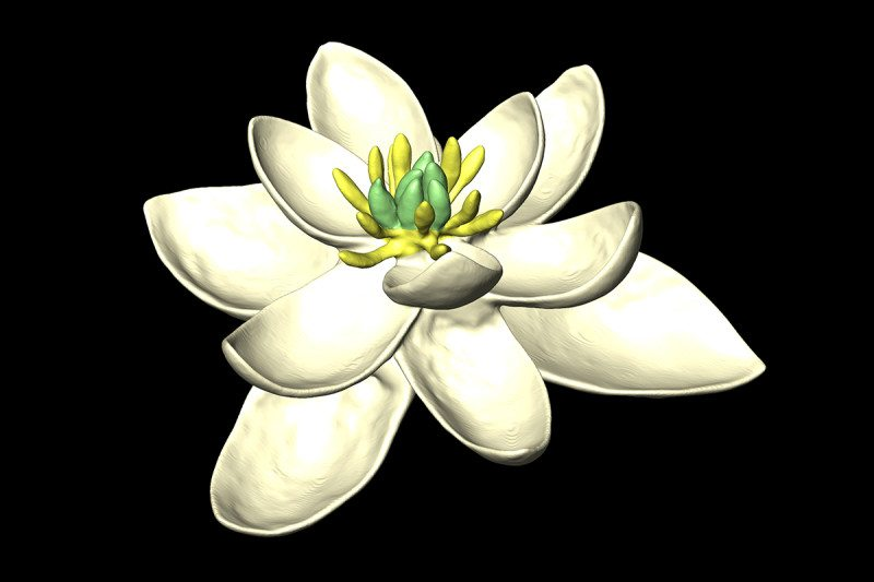 A team of scientists were able to assemble an image of what the first flower that ever appeared on Earth may have looked like.