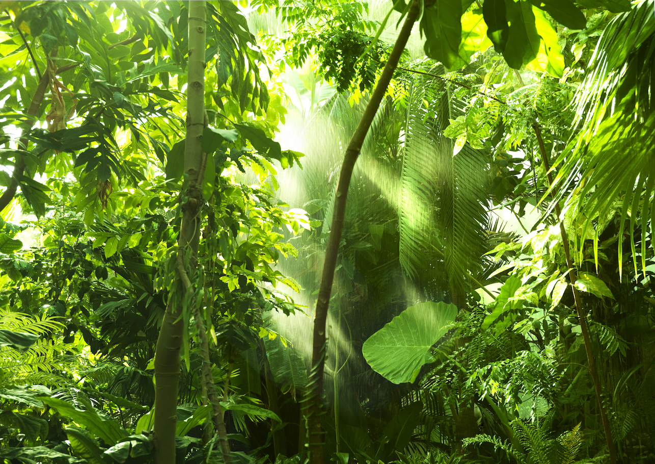 The first study of human impact on tropical forests reports that humans started altering tropical forests tens of thousands of years ago.