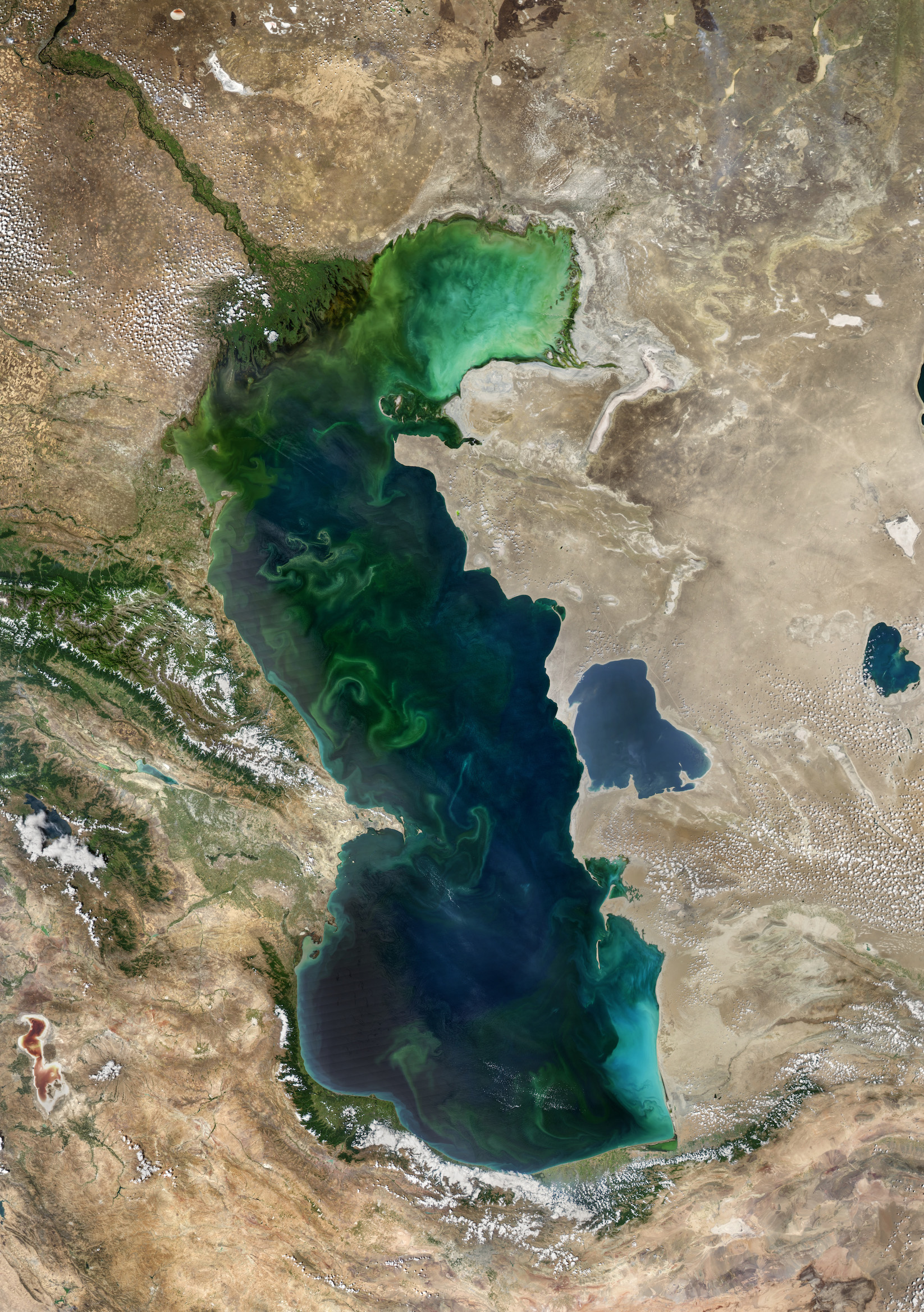 Today's Image of the Day comes thanks to the NASA Earth Observatory and features a look at beautiful phytoplankton blooms in the Caspian Sea.