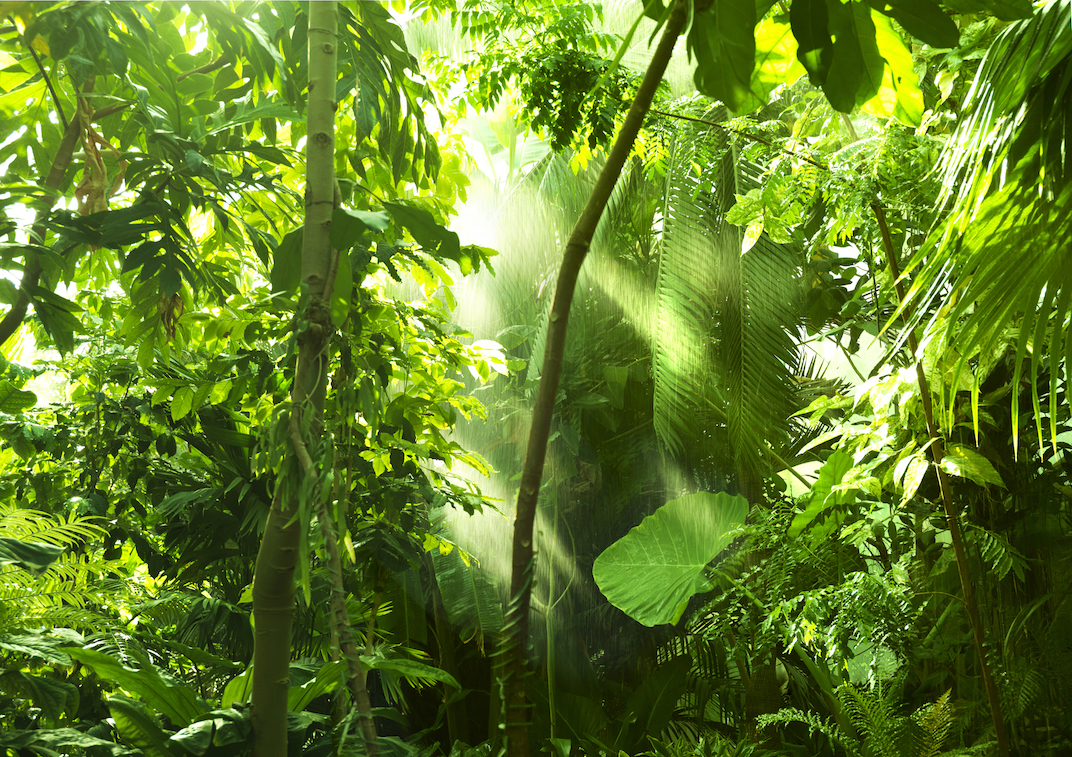 New research has revealed that tropical trees continue to accumulate high rates of carbon even into old age.