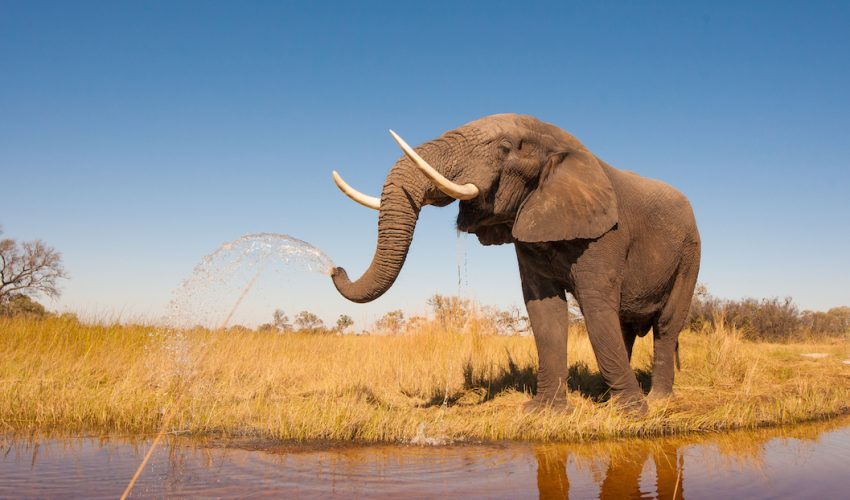 Thanks to a new project meant to help raise awareness called Hello in Elephant, you can actually speak elephant language.