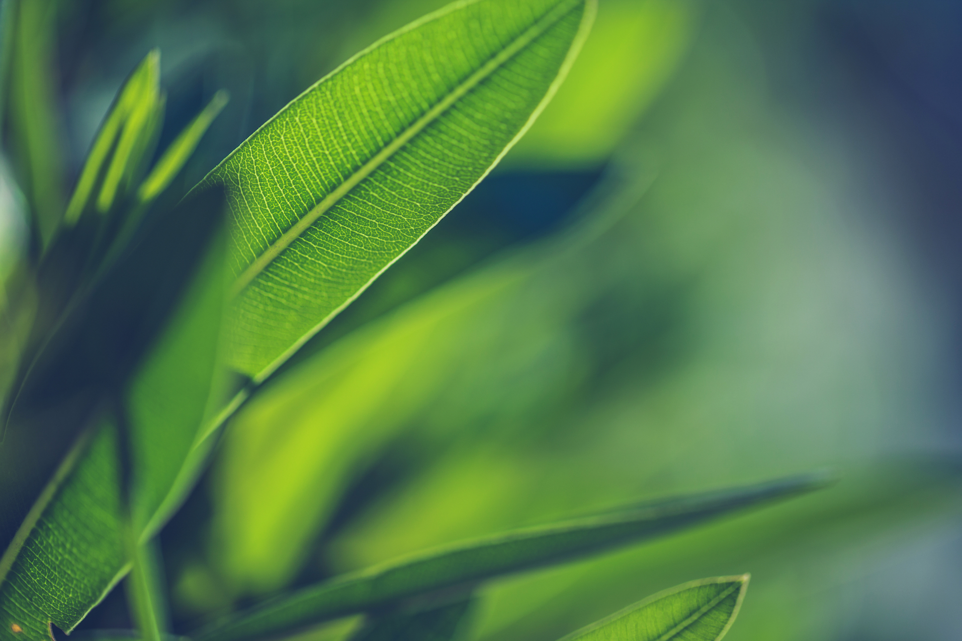 Scientists have found a way to remodel plant waste into carbon fiber strong enough to be used to build airplane and automobile parts.