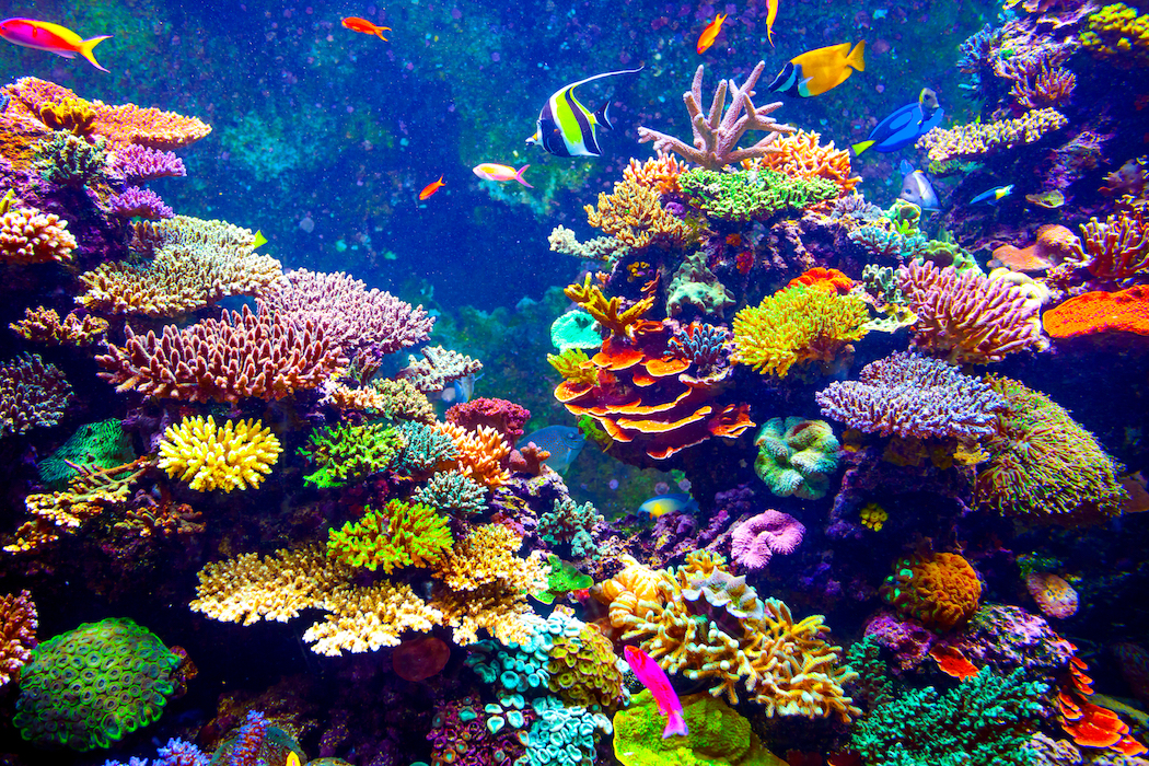 A new study has revealed that coral is amazingly resilient when form its skeletal outer layer, protecting it from ocean acidification.