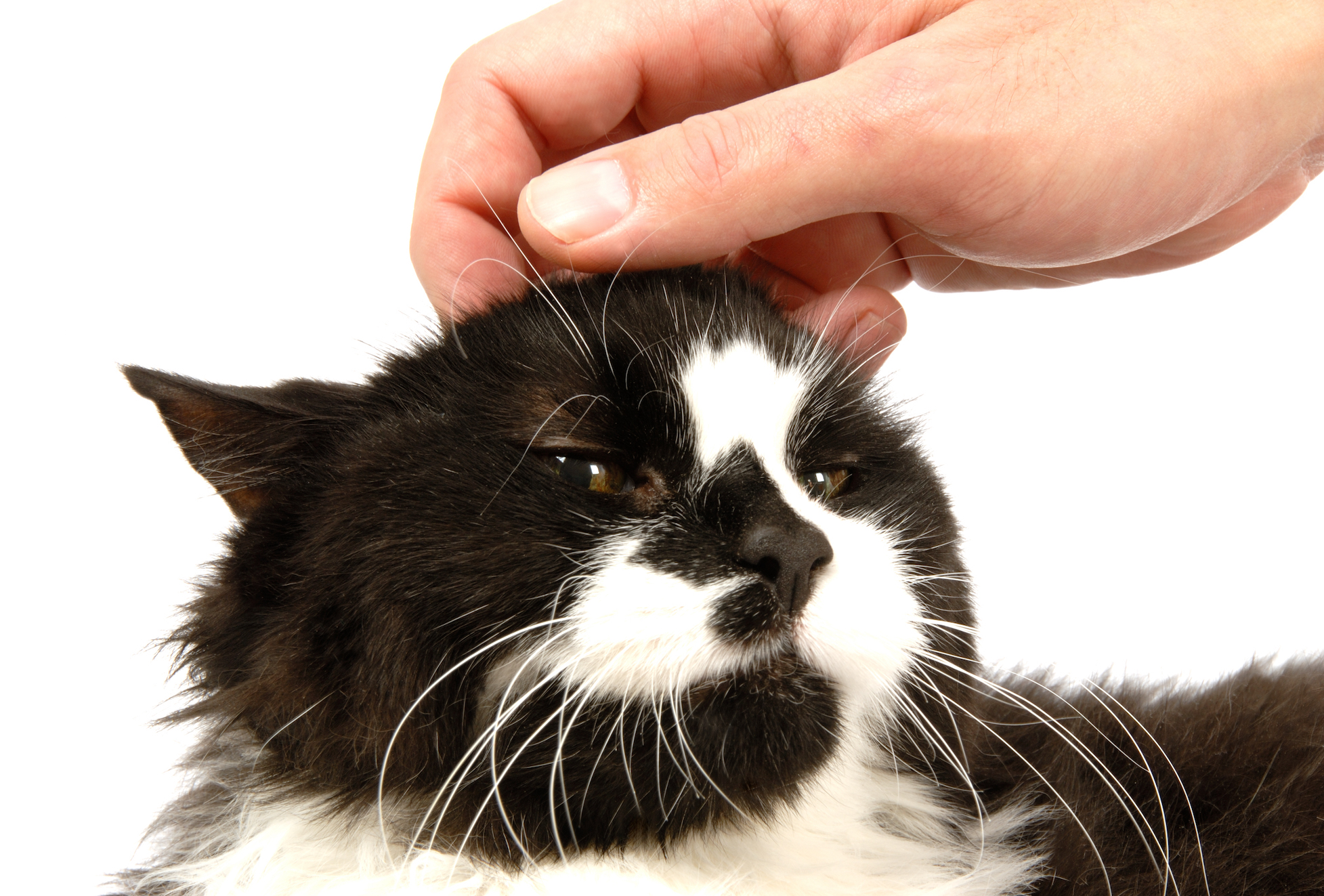 New research has revealed that cats love getting their head scratched because it reminds them of being groomed by their mother as a kitten.
