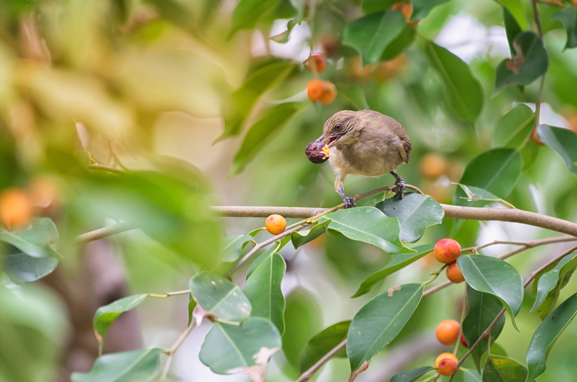 A new study has found that some birds adapt to habitat degradation from grazing by changing their diets and eating different available seeds.