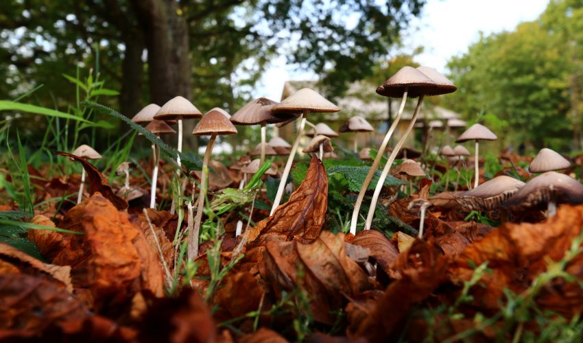Psychedelic mushrooms may actually be used in the future to treat depression, according to several British scientists.