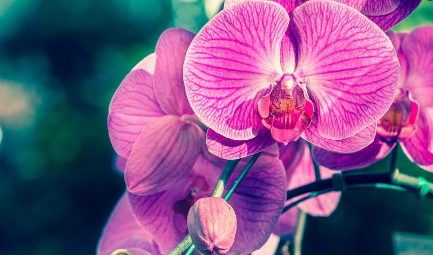 Scientists have unlocked the genetic code of an orchid native to southeast China in order to better understand the the plant's evolution.