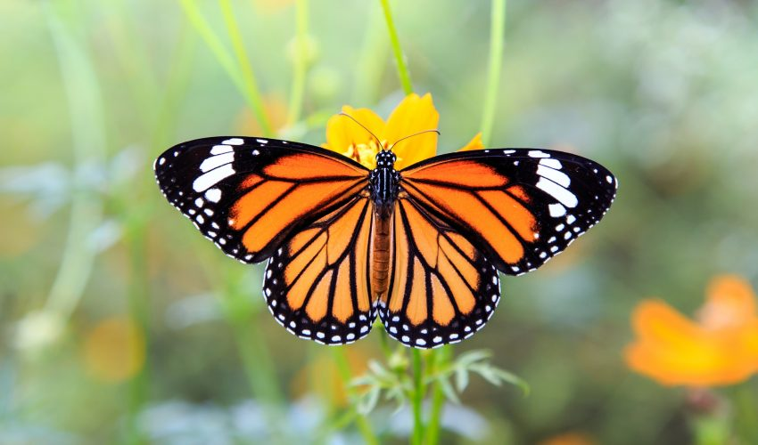 In March 2016, a storm in Mexico caused irreparable damage to monarch butterfly colonies who were staying there for the winter.