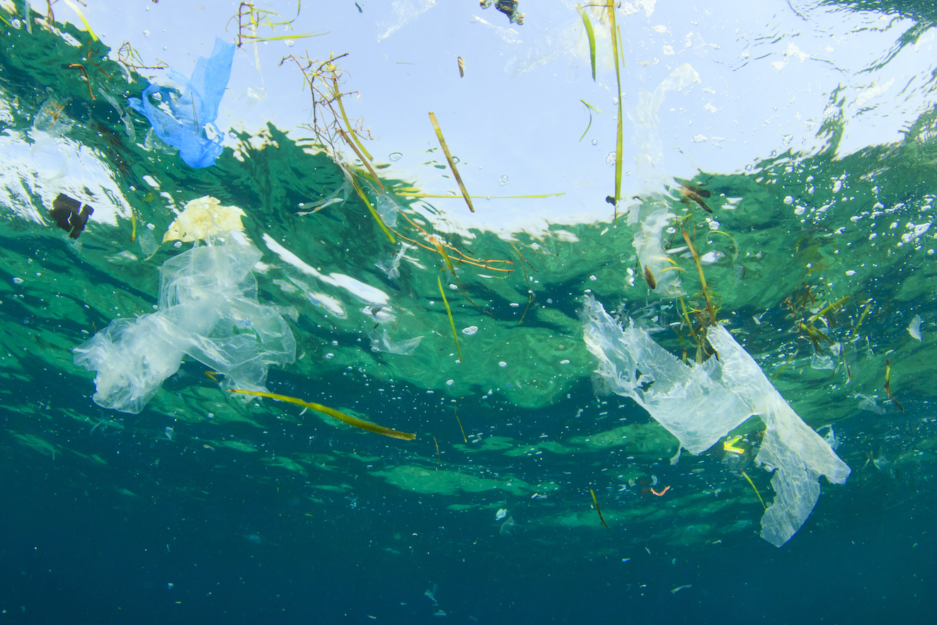 Researchers have determined that the best strategy to eradicate plastic pollution may be to appeal to the public's love of the sea.