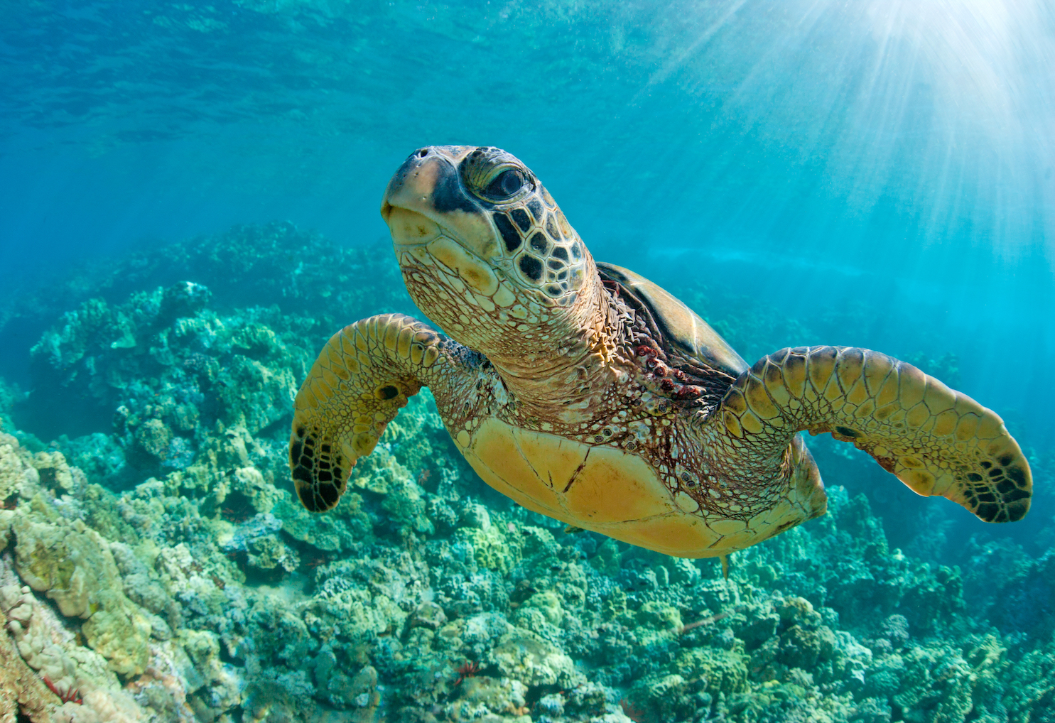 According to new research, decades of conservation efforts to protect sea turtles have paid off as their numbers are steadily growing.