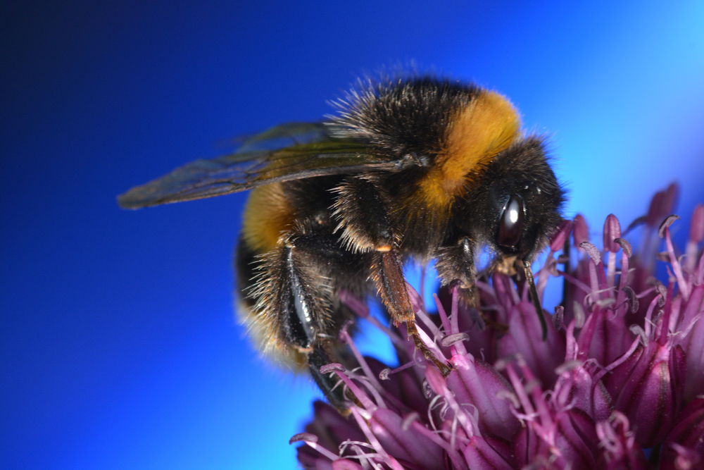 Longer blooming seasons may seem good for bees, but they may be causing more harm than good.