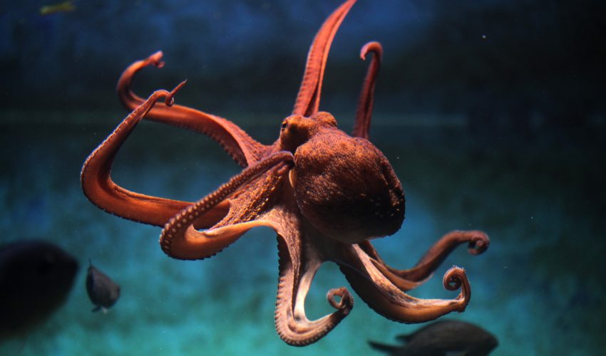Engineers have invented camouflage stretchable surfaces with programmable 3D texture inspired by the real skin of octopus and cuttlefish.