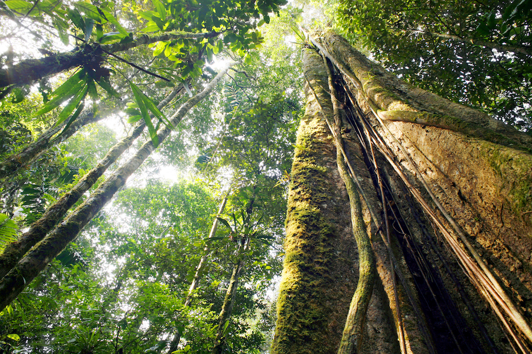 According to new research, sustainable subsistence hunting by Amazonian communities does not pose a severe threat to the surrounding forests.