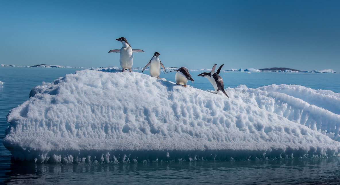 The WWF has called for the creation of a massive Antarctic marine sanctuary to protect native animals from the nearby fishing grounds.