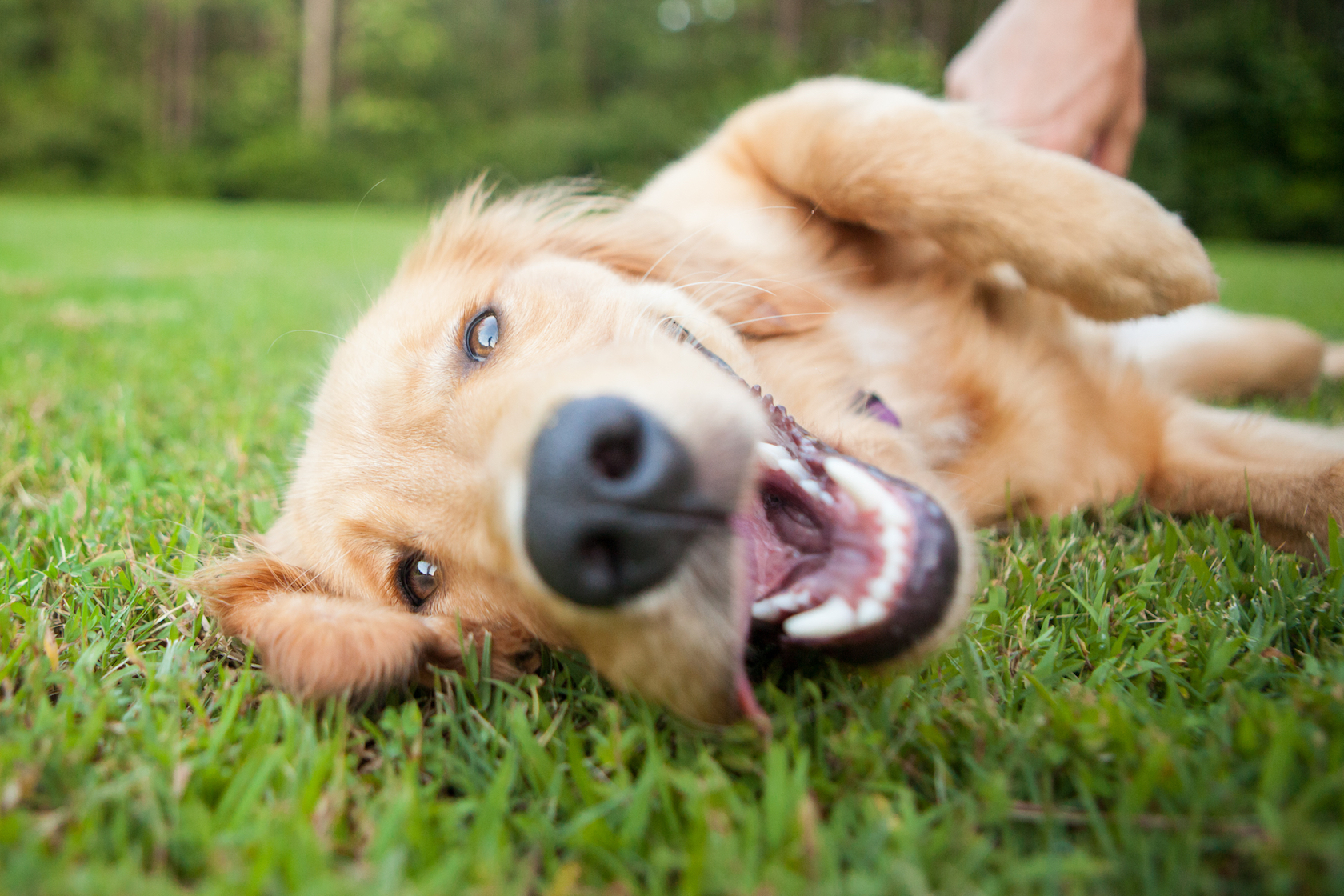 A new study reveals that dogs are more expressive in an attempt to communicate and not just because they are excited.