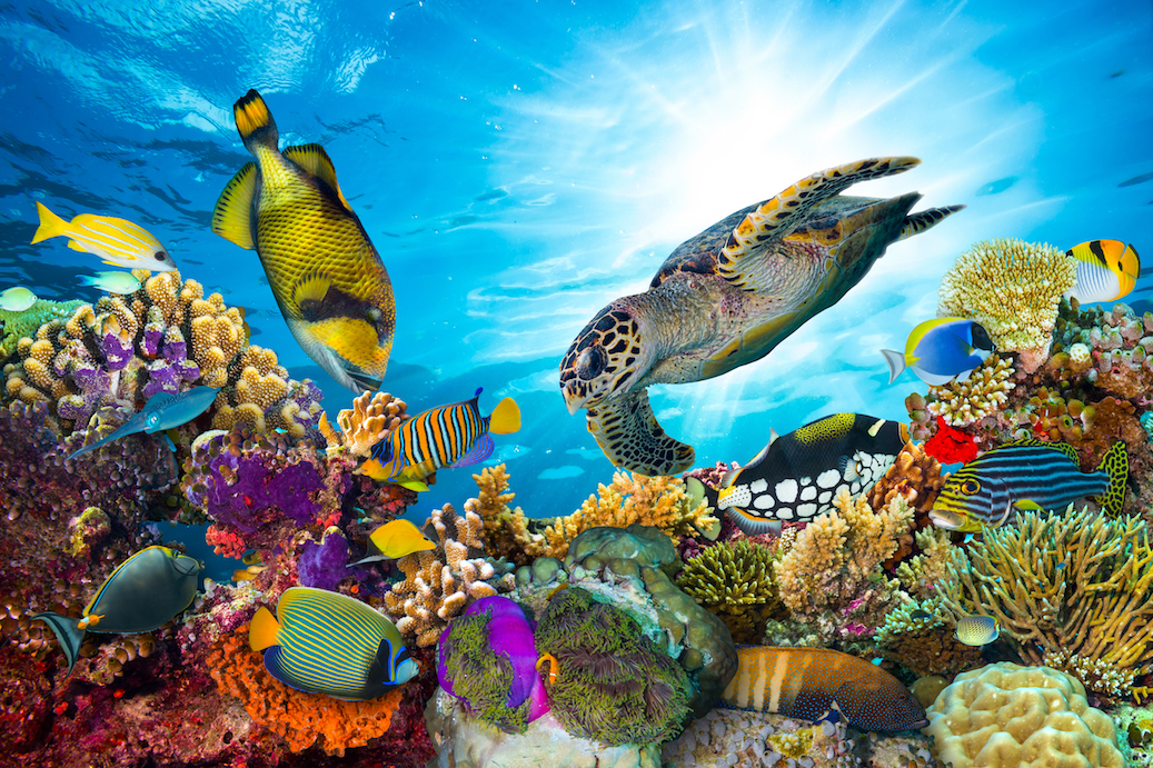 Scientists have discovered that marine ecosystems were essentially unchanged by one of the largest mass extinctions to ever take place.